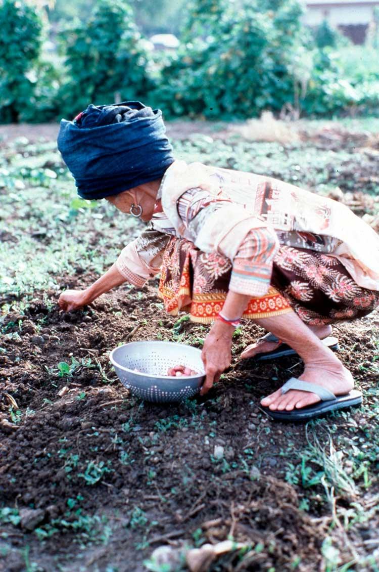 woman picking produce.
