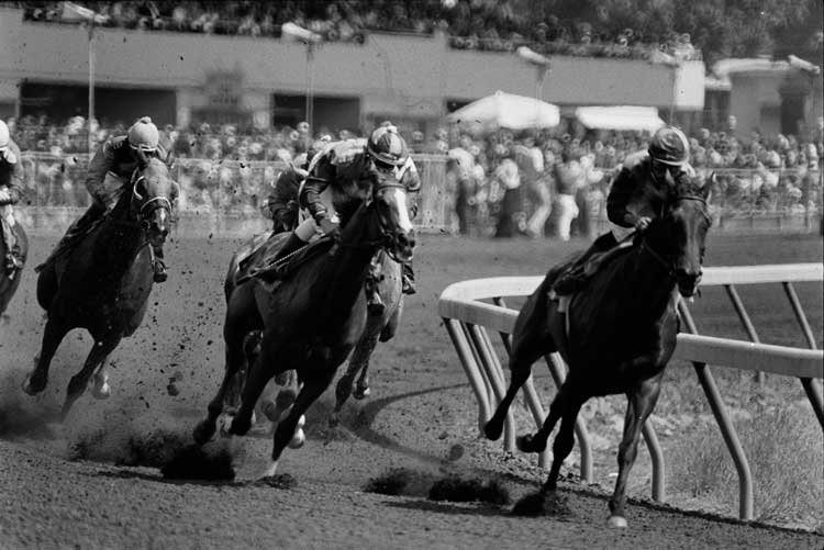 Horse race at the Sonoma County Fairgrounds.